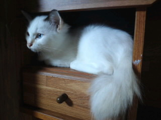あい里親募集!!/猫福<にゃんぷく>ふくちゃんの猫の里親募集ブログ