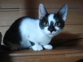 一郎里親募集!!/猫福<にゃんぷく>ふくちゃんの猫の里親募集ブログ