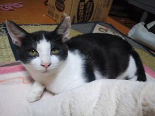 らき里親募集!!/猫福<にゃんぷく>ふくちゃんの猫の里親募集ブログ